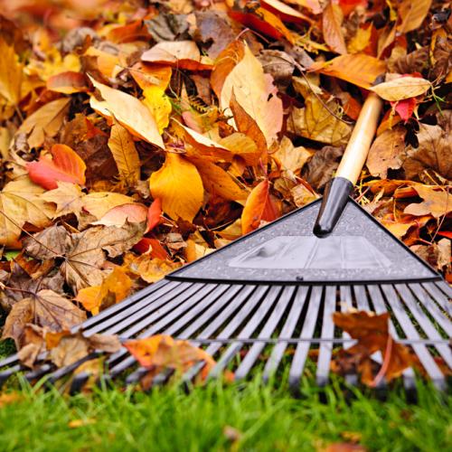 Fall Lawn-Care Secrets