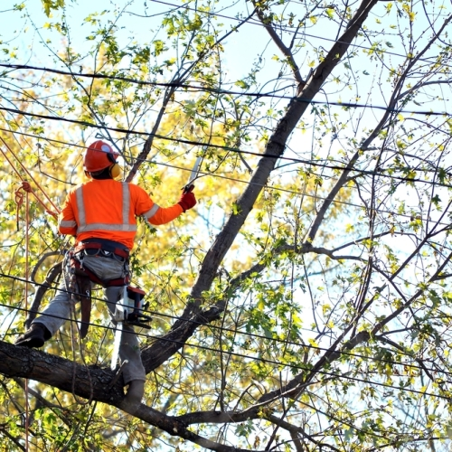 How tree services can protect your property