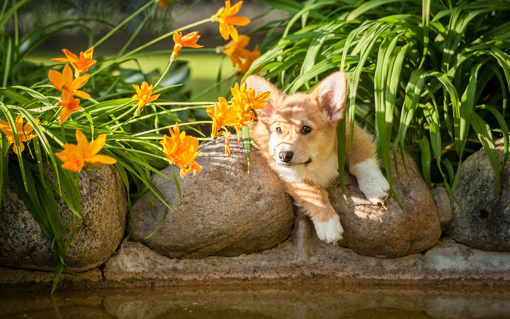 Spring Garden Safety for Pets