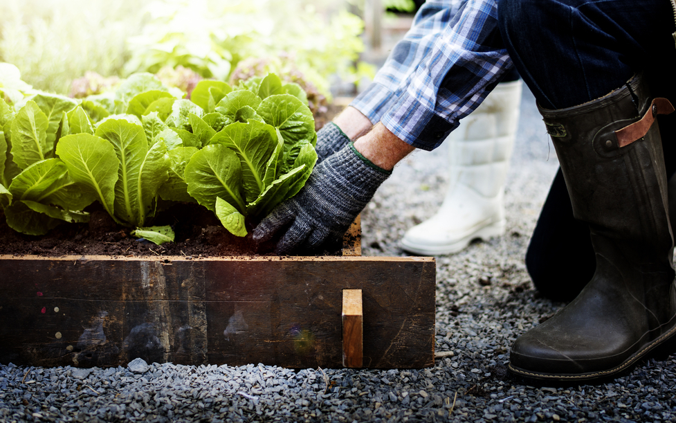 Six Benefits of Growing Your Own Food