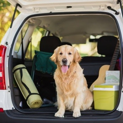 Taking your pet on vacation: travel hazards and safety tips revealed