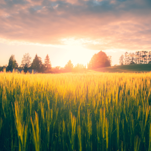 Smart ways to save on the cost of farm insurance