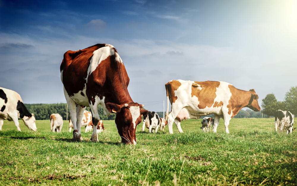 Celebrate national dairy month by creating a safe dairy operation