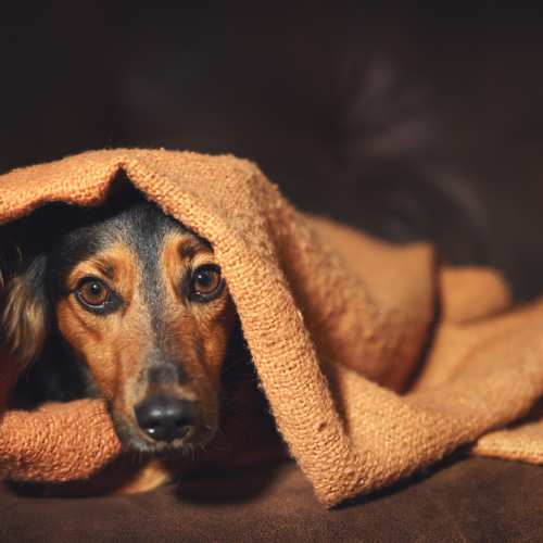 Four Ways to Ease Pets' Anxiety During July Fourth Fireworks