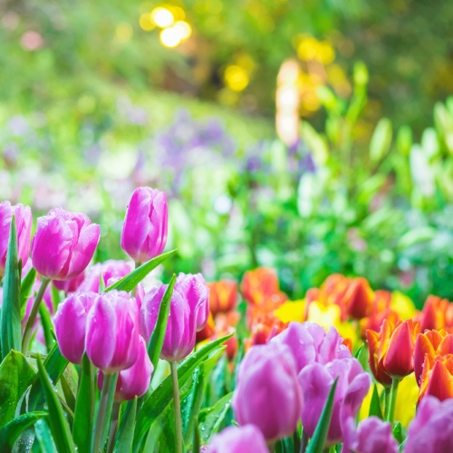 Spring Preparations for Your Lawn and Lawn Equipment